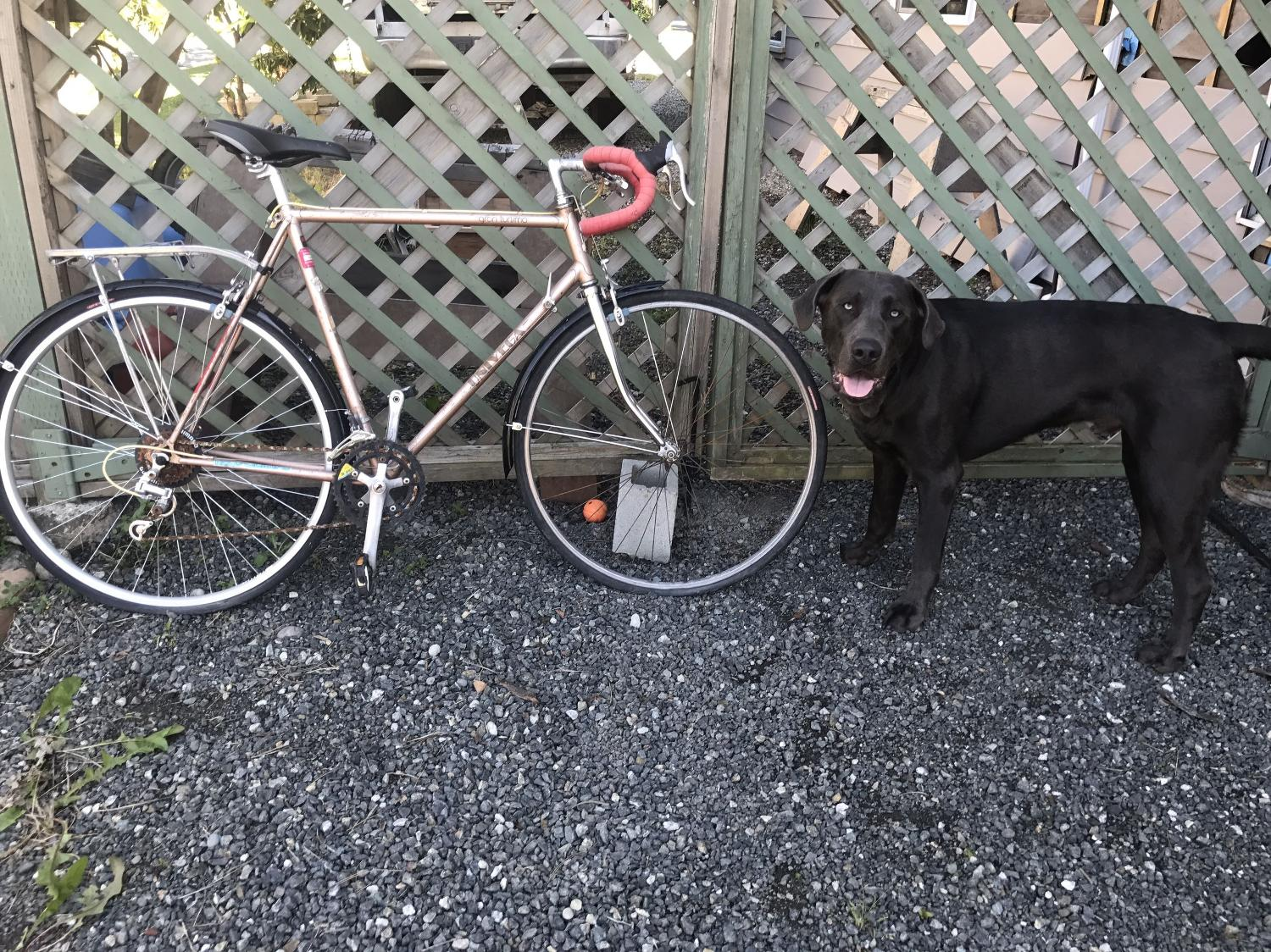 Best Reduced Price Brown Red Univega Road Bike For Sale In