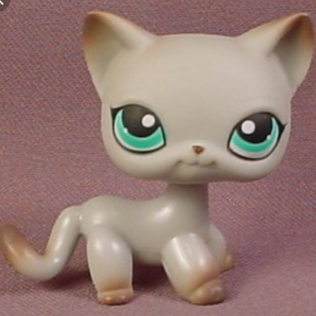 Found Looking For Lps Short Hair Cat 391