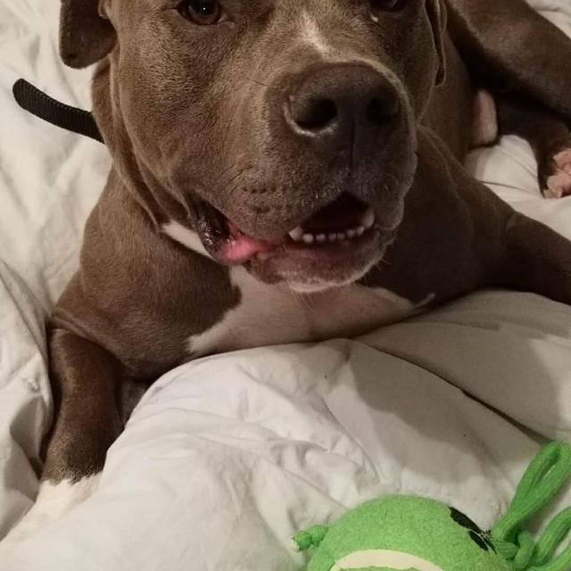 e87013067769d Looking For  In Search of any XL dog items. in Mobile