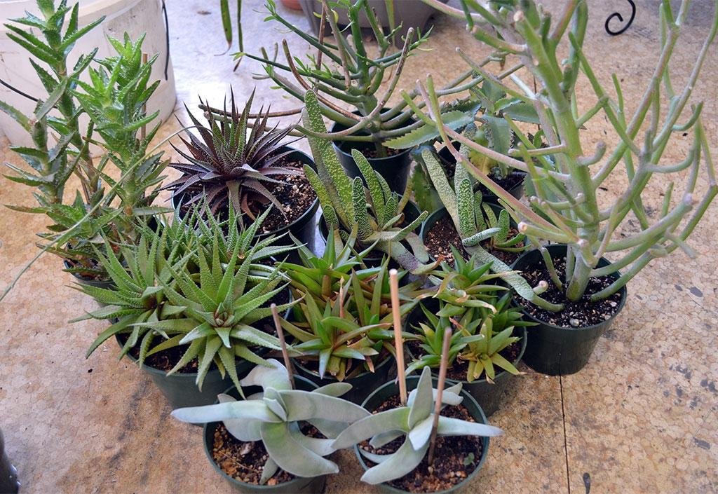 Best Succulent House Plants Orted