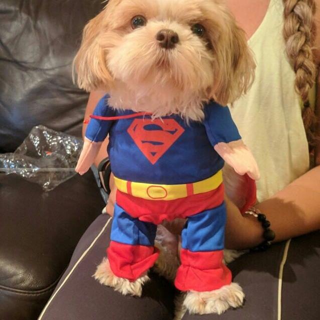 superman halloween costume for pets dogs cats