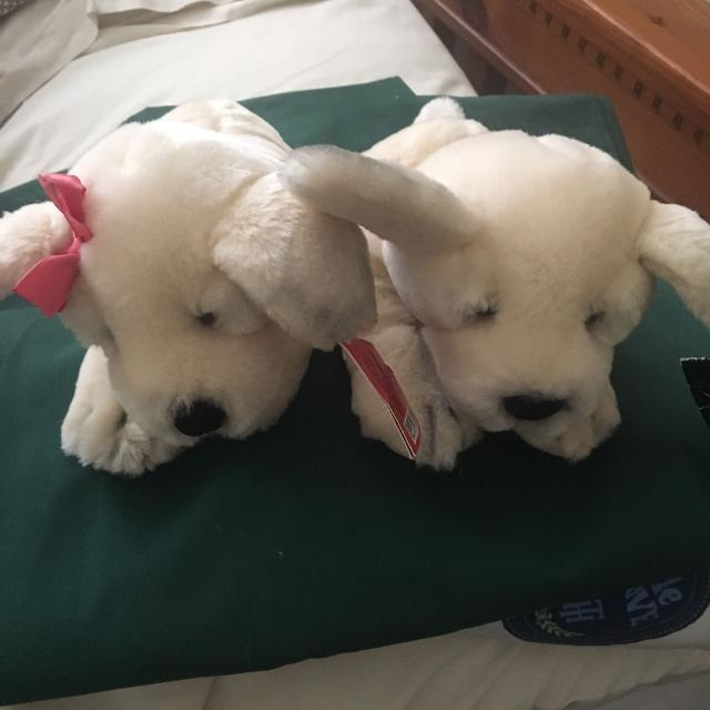 Best Victorias Secret Puppies Lillie And Spike For Sale In Temecula