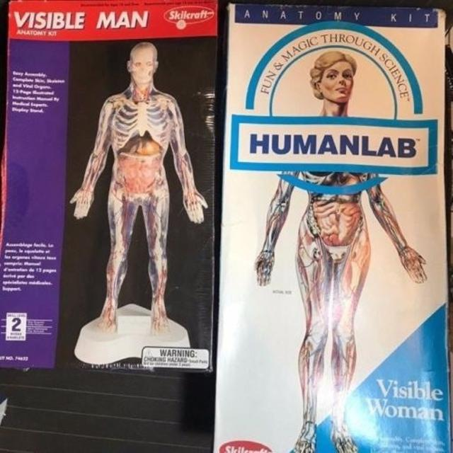 Find more Skilcraft Visible Man & Woman Anatomy Model Kits for sale ...