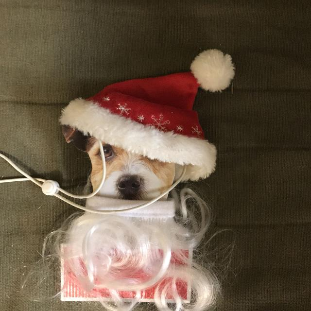 27ef0ab6d086f Best Santa Hat   Beard For Little Dogs. Size Xs s for sale in Pensacola