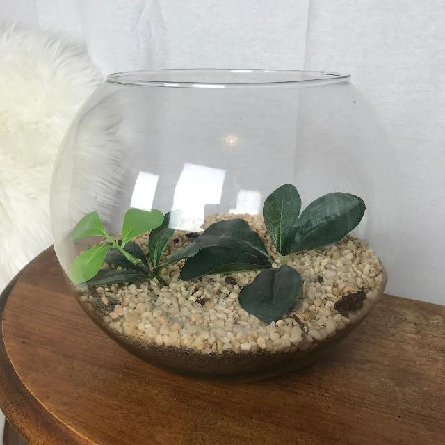 Find More Very Large Glass Terrarium Bowl For Sale At Up To 90 Off