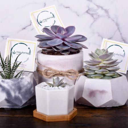 Succulents and cactus for sale  Canada