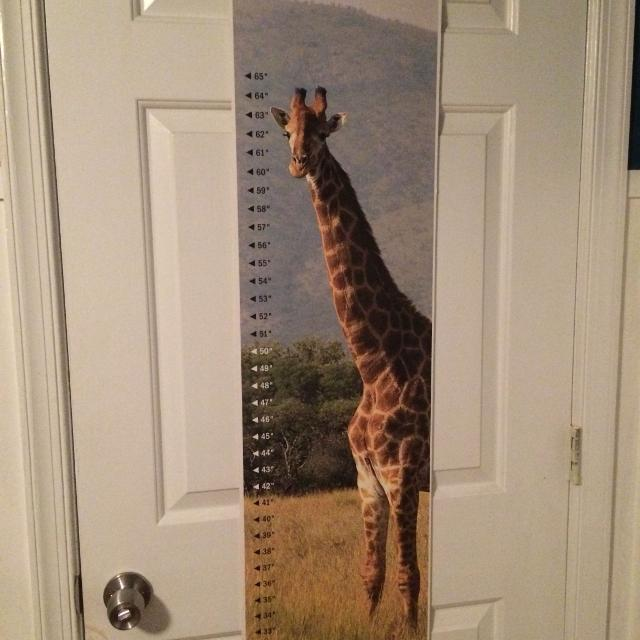 Find More Giraffe Growth Chart For Sale At Up To 90 Off