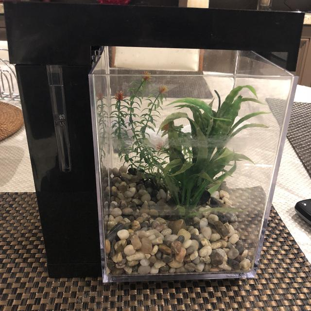 081d80a32e9 Find more Betta Fish Tank for sale at up to 90% off
