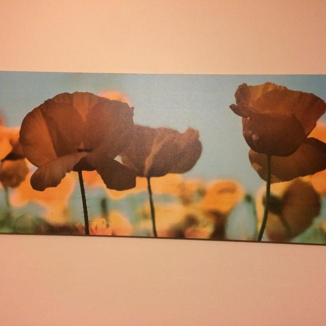 Best Ikea Floral Canvas Wall Art for sale in Appleton, Wisconsin for ...