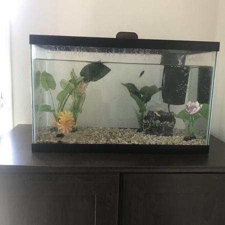 Best new and used pets near oceanside ca for Fish tank supplies near me