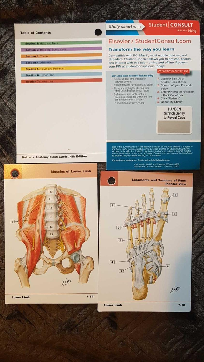 Best Brand New Netter Anatomy Flashcards for sale in Victoria ...