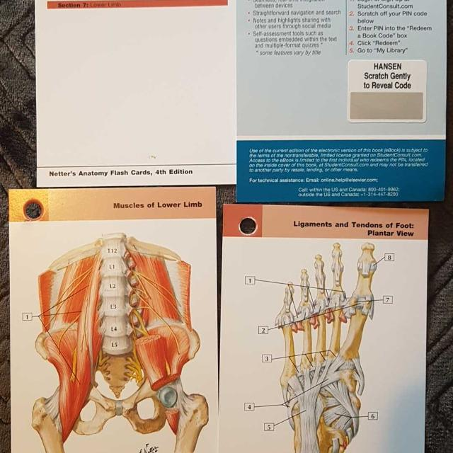Best Brand New Netter Anatomy Flashcards For Sale In Victoria