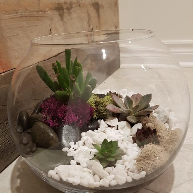 Find More Extra Large Succulent Terrarium For Sale At Up To 90 Off