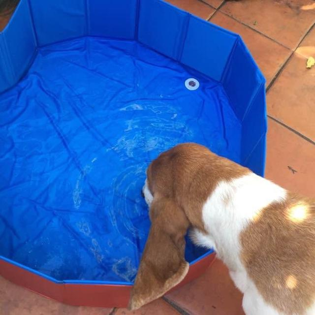 Find more Dog Paddling Pool for sale at up to 90% off