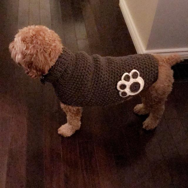 d00ec5e2370e Best Dog Apparel for sale in Mississauga, Ontario for 2019