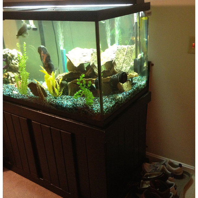 Find more 120 Gallon Aquarium/ Fish Tank Setup for sale at ...