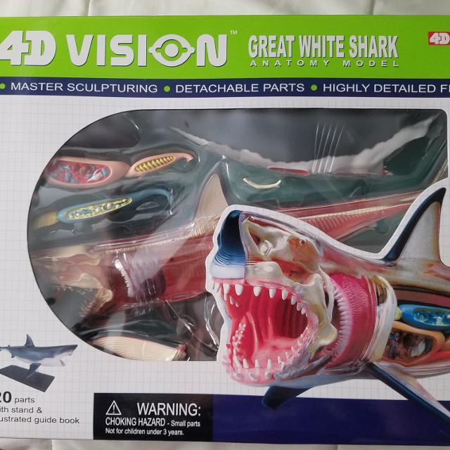 Find more 4d Vision Great White Shark Anatomy Model for sale at up ...