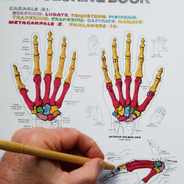 Best The Anatomy Coloring Book For Sale In El Cajon California For 2020