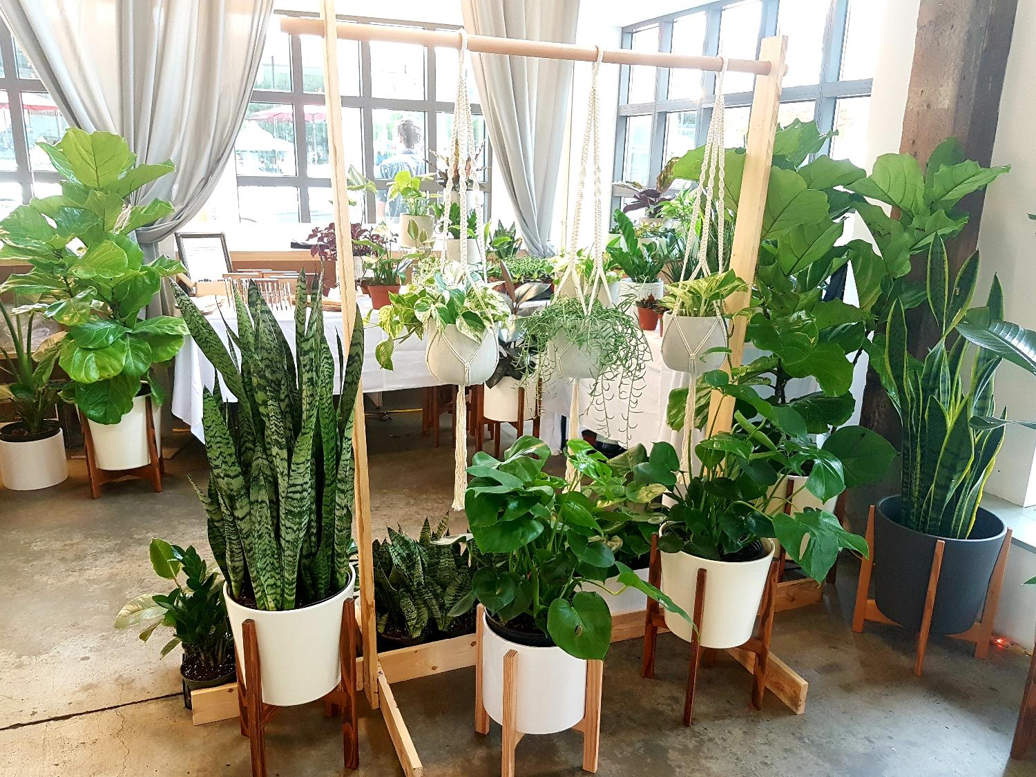 Best Indoor Tropical Plants For Sale In North Vancouver British