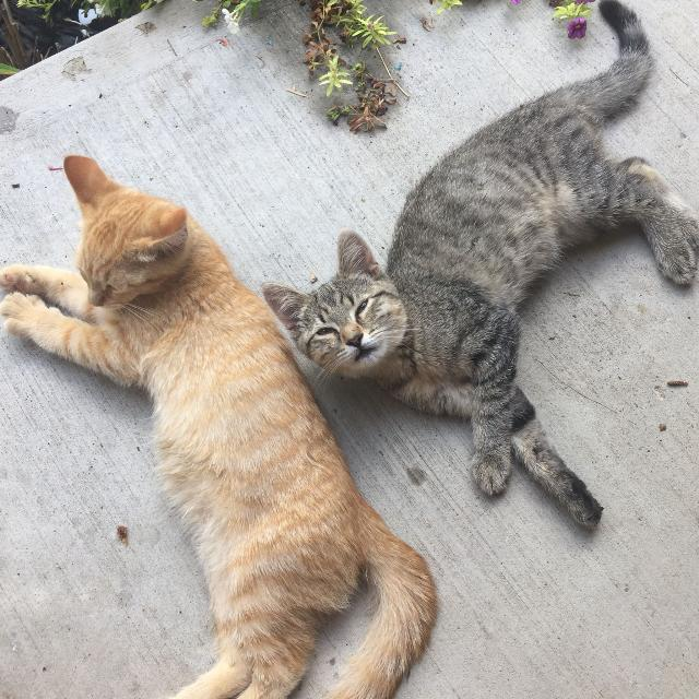 02ace0f0ff4e4e Best Found 2 Kittens for sale in Aylmer