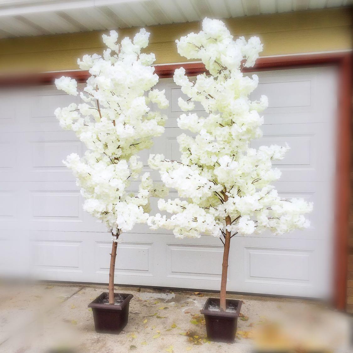 Cherry Blossom Tree Black And White: 2 White Cherry Blossom Trees (8ft Tall) For Rent In