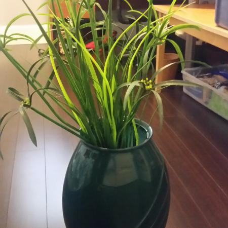 Plants & glass jade color vase 3 feet... for sale  Canada