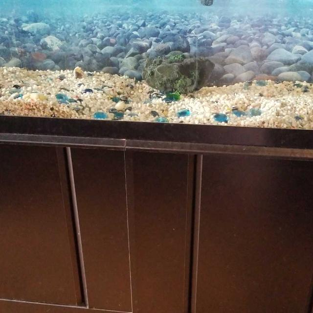 Looking For Wanted Large Fish Tank In Regina Saskatchewan 2018