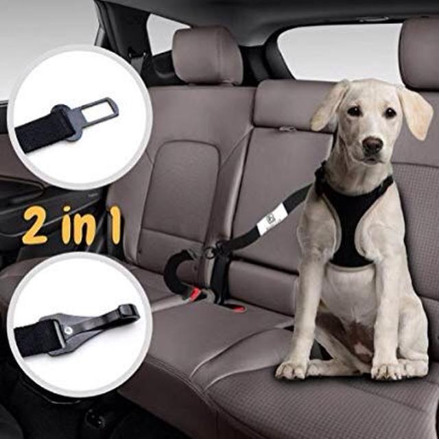 Best Dog Seat Belt >> Best Dog Seatbelt For Sale In Duncan British Columbia For 2019