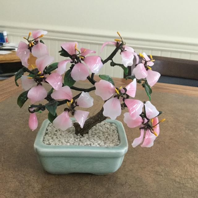 Best Glass Bonsai Tree For Sale In Salmon Arm British Columbia For 2021