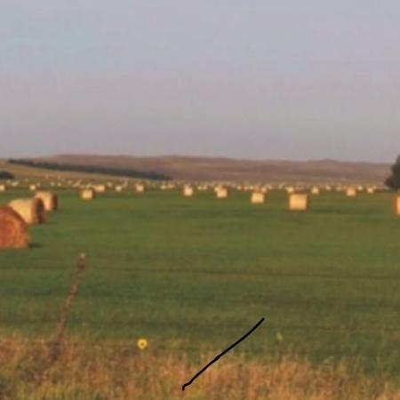 Hayland for sale  Canada