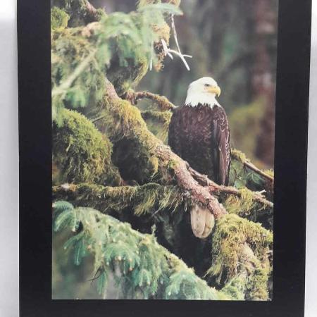 Eagle Picture for sale  Canada