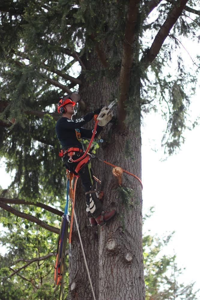 Best Climbing Arborist For Sale In Victoria British