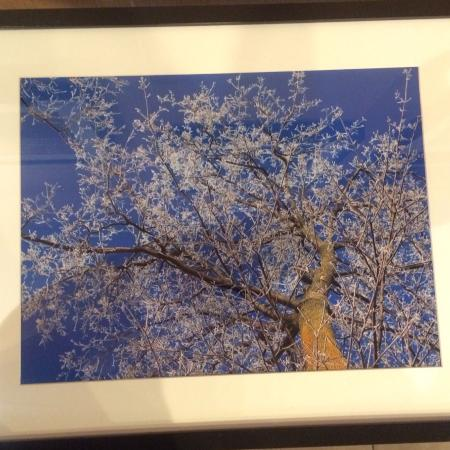 Local photography. Winter iced over tree for sale  Canada