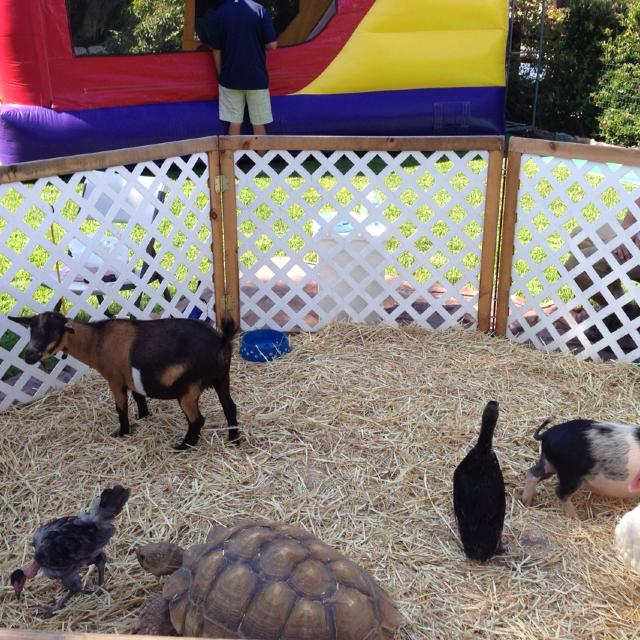 Having a party?? Let me bring my Zoo 2 U    Mobile pony rides & petting zoo