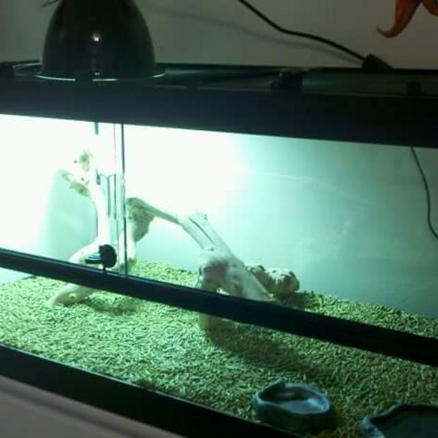40 gallon reptile tank  Front glass slides open  Comes with basking lamp ,  water bowl, drift wood and a large cricket holder