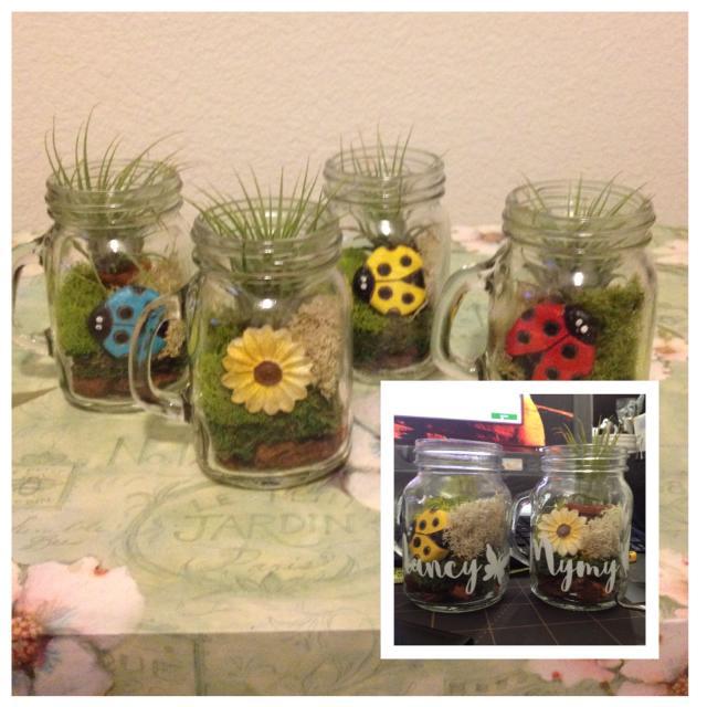 Best Mini Mason Jar Garden Plant Terrarium For Sale In Orangevale