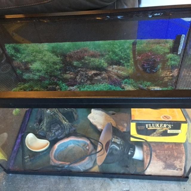 20 gallon reptile tank with all accessories
