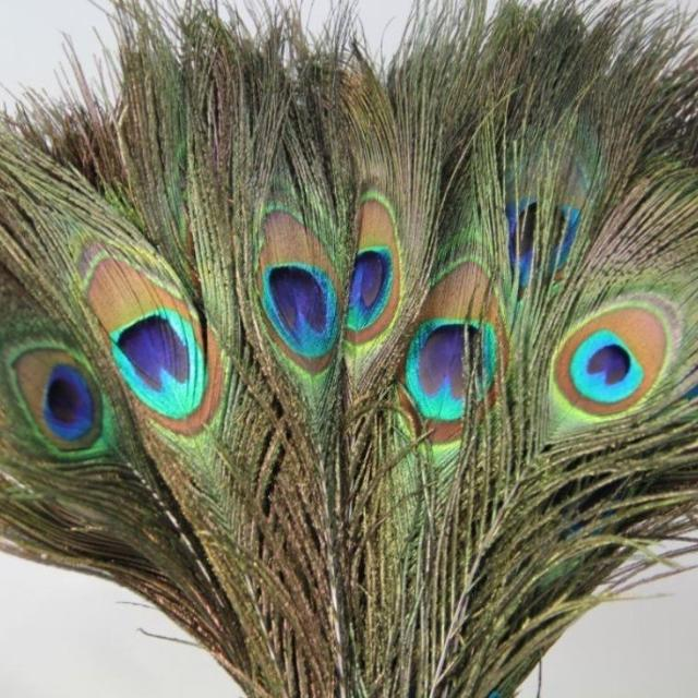 Best peacock feathers for sale for sale in etobicoke for Where can i buy feathers for crafts