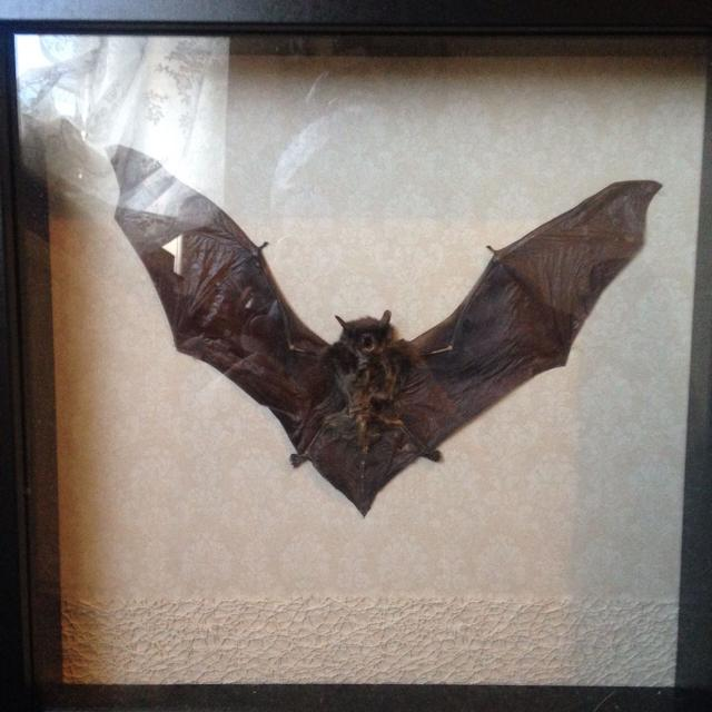 Taxidermy Bat