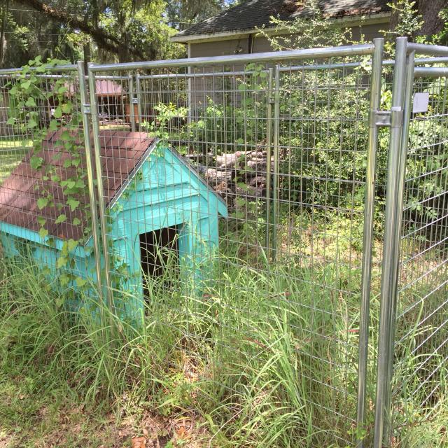 Find More 8x10 Dog Run With Nice Large Doghouse With