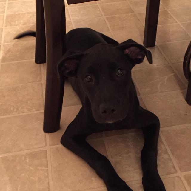 Find More Sophia Free To A Loving Home 5 Months Old