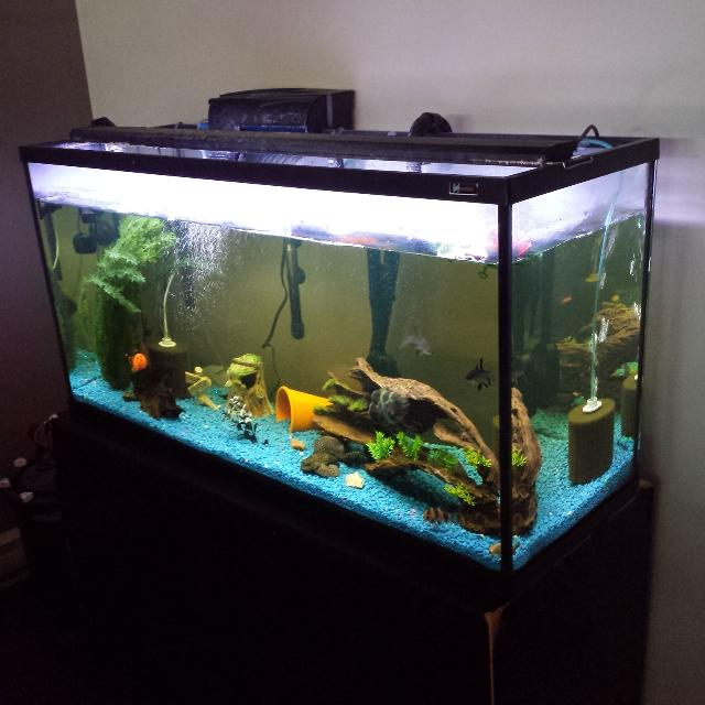 80 gallon aquarium heater 1000 aquarium ideas