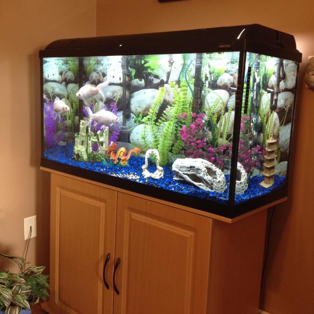 Find more euc 55 gallon fish tank and stand for sale at up for 55 gallon fish tank for sale