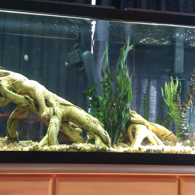 Best 55 Gallon Fish Tank For Sale In Austin Texas 2018