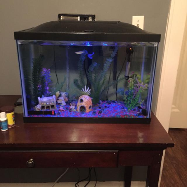 Find more 20 gallon fish tank for sale at up to 90 off for 20 gallon fish tank kit
