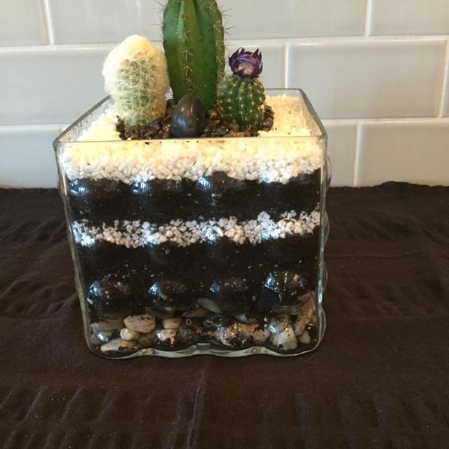 Find More Cactus Terrarium In Unique Bubbled Square Vase For Sale At