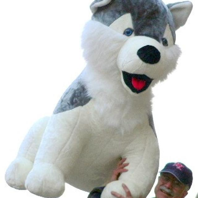 Best Oversized Stuffed Husky Dog - More Than 3 And 1 2 Feet Tall And 3 Feet  Wide And 3 Feet Deep - Big Plush Animal for sale in Minot b1ad3c9f0e5f