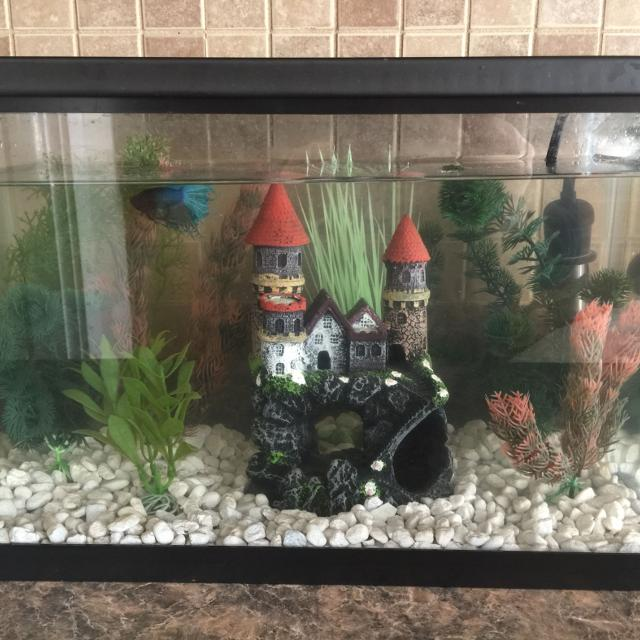 Find more 10 gallon fish tank terrarium harry potter for Harry potter fish tank