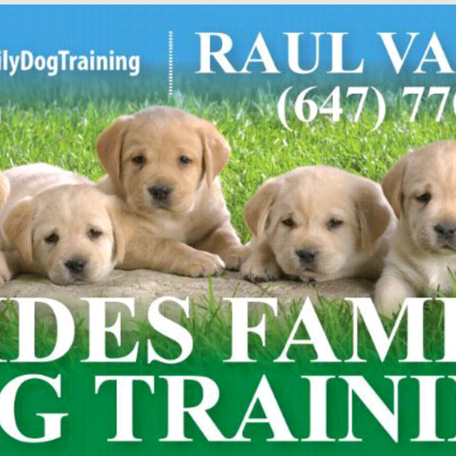 PUPPY AND ADULT DOG TRAINING