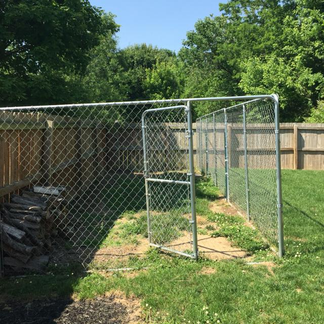 Find More 10 X 30 X 6 Foot Chain Linked Dog Kennel With Door Needs